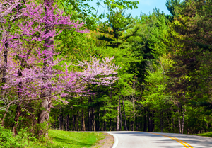 15 Super Spring Motorcycle Roads