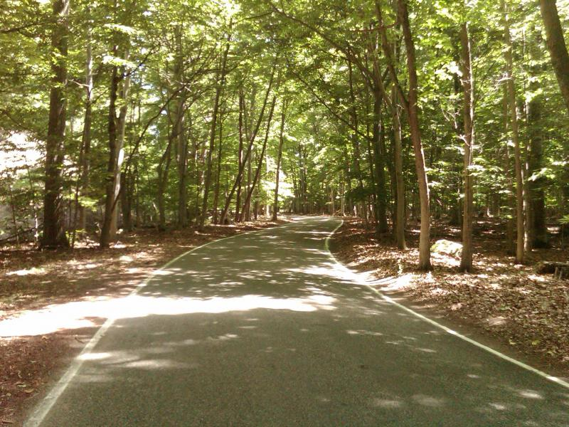 tunnel of trees road in michigan michigan motorcycle roads and